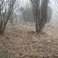skov med krat og grene