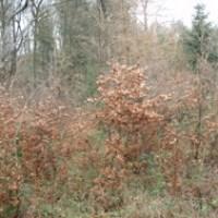 skov dækket af krat