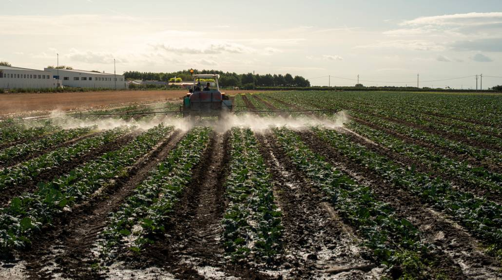 An agricultural tractor sprays plants with chemicals and pestici