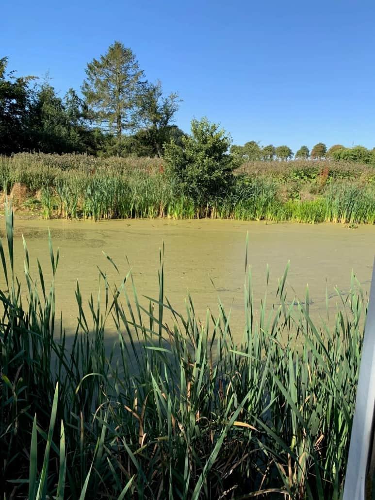 fmt oprenser sø for andemad